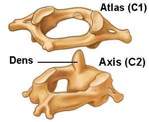 atlasaxis3-BB.jpg